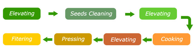 main process of small soya bean seed oil press line